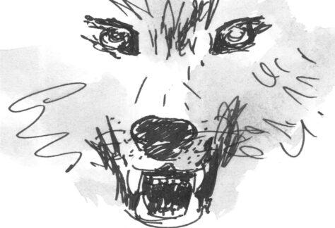Il Lupo ritratto dal M° A. Spinogatti